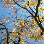 Azzurro e arancione in autunno